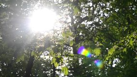Sun shining through branches, leaves in forest. Sun is shining through the branches and green leaves in the forest park, natural background HD 1080 stock video footage