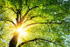 The sun shining through the branches of a tree Stock Images