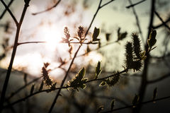 Sun shining through branches of tree Stock Photos