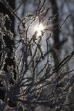 Frost on the branches of a tree Royalty Free Stock Image