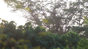 Sun shining brightly through leaves at  sunrise. Morning sun shining brightly through green tree leaves at the sunrise stock video footage
