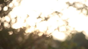 Sun shining brightly through leaves at  sunrise. Morning sun shining brightly through green tree leaves at the sunrise stock footage