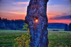Sun shining through the broad leaf tree trunk at autumn/fall evening., Stock Photos