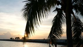 Sun shining through the coconut palm leaves on the beach at sunset time in the evening stock video