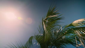 Sun shining through coconut palm trees with reflections on background sky. 4k stock footage