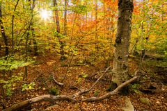 Sun Shining Through Colorful Leaves on Autumn Trees Stock Photos