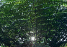Sun shining into Common Free Ferm's leaves Stock Photo