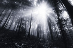 Sun shining in dark forest Royalty Free Stock Image
