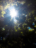 Sun shining day. Sun is  shining so bright through that thick trees on a beautiful summer day Stock Photo