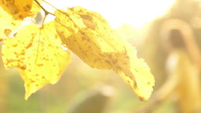 Sun shining through fall leaves stock video footage