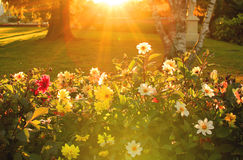 Sun shining on a flowers Royalty Free Stock Photos