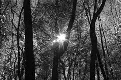 Sun shining through forest Stock Photography
