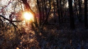Sun shining through forest. Scenic view of sun shining through trees on top of mountain Royalty Free Stock Photos