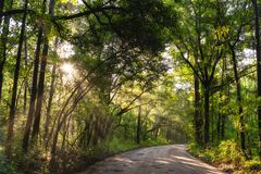 Sun shining through the forest in South Carolina royalty free stock images