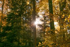 Sun Shining Through Forest Trees Foliage in Autumn.  royalty free stock images