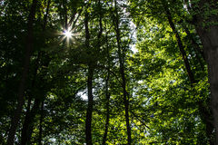 Sun shining in the forest Royalty Free Stock Photography