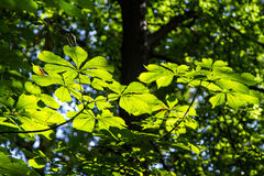 Sun shining in the forest Stock Photography