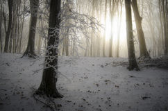 Sun shining in frozen forest with fog Stock Photos