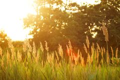 Sun Shining on Grass in Field Royalty Free Stock Image
