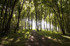 Sun shining in a green forest in summer with road Stock Photo