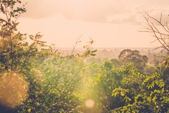 Sun shining into green jungle Royalty Free Stock Image