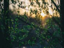 Sun shining on green leaves in forest stock image