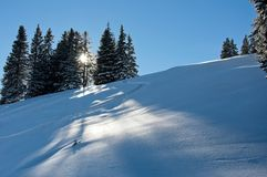 The sun shining through a group of trees on a beautiful sunny day in the snowy mountains stock photography
