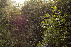 Sun Shining Through Heavy Rain Stock Photography