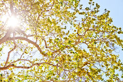 Sun shining through leaves Stock Photo