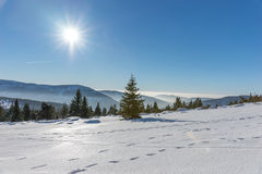 Sun shining with lens flare over snow covered Giant mountains. Czech Republic Stock Image