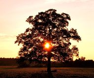 Sun shining through middle of the tree out in a local field. Stock Images