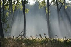 The sun is shining in the morning into the forest in the Oostvaardersplassen Netherlands Stock Photos