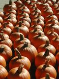 Sun shining off rows of pumpkins for sale royalty free stock photos