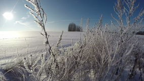 Sun shining through old hoarfrost covered grass stalks in field, time lapse 4K stock video