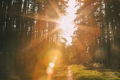 Free Sun Shining Over Forest Lane, Country Road, Path, Walkway Through Stock Image - 103965091