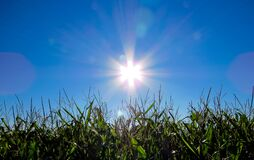 Sun shining over grass Stock Images