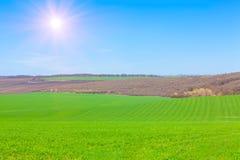 Sun shining over green fields Stock Photos