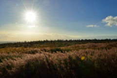 Sun shining over the tall grass field in Volcano National Park at sunset, Big Island of Hawaii Stock Photography