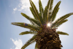 Sun shining through palm tree Royalty Free Stock Photography