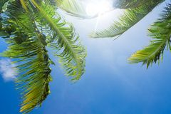 Sun shining through palm tree leaves Royalty Free Stock Photography