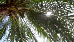 Sun shining through palm tree leaves. Shot with a Sony a6300 fps29,97 4k stock video footage