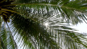 Sun Shining Through Palm Tree Leaves. Shot with a Sony a6300 fps29,97 4k stock footage
