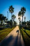 The sun shining through palm trees along a path in Daytona  Beac Stock Photography