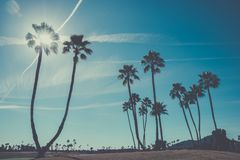 Sun shining through palm trees, paradise landscape. Sun shining through silhouette of palm trees, paradise landscape background Royalty Free Stock Images