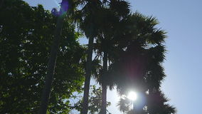 Sun shining through palm trees. The wind shakes the palm trees. Slow motion stock video footage