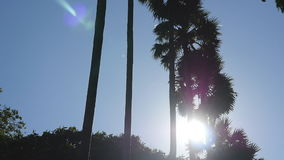 Sun shining through palm trees. The wind shakes the palm trees. Slow motion stock video