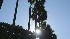 Sun shining through palm trees. The wind shakes the palm trees. Slow motion stock footage