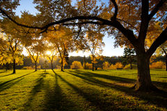 Sun Shining in Park Stock Photography