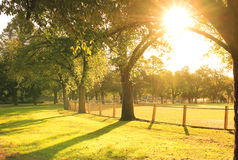 Sun shining at the park Royalty Free Stock Photo
