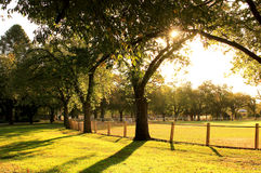 Sun shining in a park Stock Photography